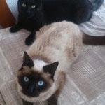 Chester & Chi leben inzwischen happy in der Nähe von Hamburg! :-)