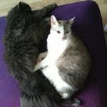 Bounty & Nacho - 2 deutsche Abgabekatzen - haben ein schönes neues Zuhause gefunden! :-)