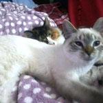 Tejon hat sein Happy Home und seinen neuen best buddy Simba sofort ins Herz geschlossen!