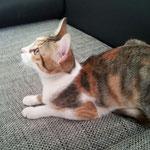 Sibi ist nun auch in ihrem Forever-Home angekommen! :-)