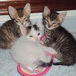 Die beiden grauen Mädels Aretha & Althea haben ihr Happy Home gefunden, der kleine weiße Kater sucht noch... :-)