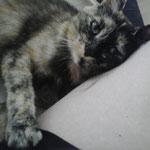 Esmeralda - Topf & Deckel, oder Mensch und Katze = perfektes Team auf Anhieb! :-)