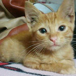 Der kleine Roy ist nun der Chef im Mehrkatzenhaushalt in Neu-Anspach :-)