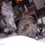 Ratz & Rübe, 2 deutsche Abgabe-Katzen nun endlich richtig HAPPY! :-)