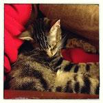 Der kleine Ticco, ehemals Icaró, konnte trotz Handicap sein Happy Home finden! :-)