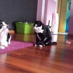Nico & Domenico durften gemeinsam umziehen :-)