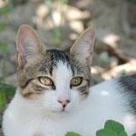 Mika, wunderschöne Maus nun auch happy. :-)