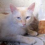 Yoyo - hübscher kleiner weißer Löwe :-)