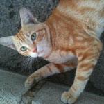 Henry heißt jetzt Jamie und wurde von der Straße gerettet. :-)