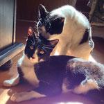 Amica & Trixi durften gemeinsam in ihr Happy Home - Mutter und Tochter unzertrennlich! :-)