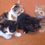 Alle 4 Mäuse haben ihr Happy Home gefunden - Luzy & Lili durften zusammen bleiben (die 2 Tricolor) - Pearl zog zu Mahou und Fossy zu unserem Nando dazu. :-)