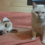 Senior Obelix fand trotz halber Blindheit und seines Alters ein kuschliges Plätzchen!!! :-)