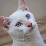 Leo - sanfter Tiger, der seine schwere Erkrankung überstanden hat & endlich happy sein darf! :-)