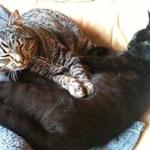 Martin (grau) zog zu Feivel und beide wurden sofort beste Freunde! :-)