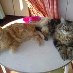 Nuno & Carlo, die zusammen bleiben konnten... :-)