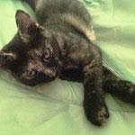Pepa hat das Herz ihrer Pflegestelle im Sturm erobert und darf dort bleiben!