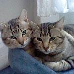 McFly & Touche durften gemeinsam in Weiterstadt glücklich werden :-)