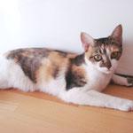 Die wilde Kitty hat ihr Happy Home gefunden. :-)