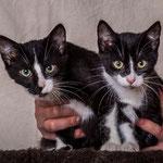 Kimi & Kessy sind inzwischen gut sozialisiert und dürfen in ihrer Pflegestelle für immer bleiben. :-)