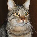 Wir beenden das Jahr 2014 wie wir es angefangen haben - mit einem Kater, der angefahren wurde und in die Tierklinik gebracht wurde. Kurz vor dem Jahreswechsel zieht Rufus nun wieder völlig gesund von seiner Pflegestelle ins Happy Home :-)