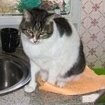 Pelusa - zunächst scheu und im Happy Home eine große Schmuserin geworden! :-)