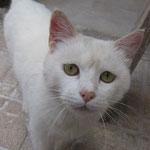 Manolillo - er wurde gemeinsam mit Jimena adoptiert