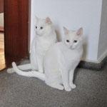 Perli und Ninja haben als letze Happy Cats 2012 ihr Happy Home gefunden und leben nun in Heidelberg.