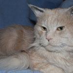 Wolfy - kam über die virtuelle Katzenklappe zu uns und hat nun sein Happy Home gefunden! :-)