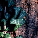 Naturbilder cherry-photography