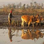 Bauer beim Pflügen in den Reisfeldern. Was auf uns nostalgisch und malerisch wirkt, ist in Wirklichkeit harte Arbeit.