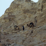 Felswand bei den Kreideklippen. Kamele gehen trittsicher über den Pass.