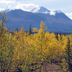 Indian-Summer in Alaska im Denali - Nationalpark.