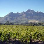 Weinbaugebiet bei Stellenbosch.