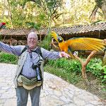 Handzahme Aras im Vogelpark von Copan in Honduras.