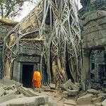 Wertvollste Steinmetzearbeiten werden in der Tempelanlage Ta Prom von den mächtigen Wurzeln der Urwaldriesen wie von den Armen riesiger Kraken umklammert.