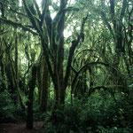 Auch beim Abstieg kommt man durch die Regenwaldzone