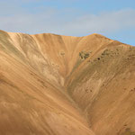 Im Denali – Nationalpark.