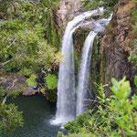 Wasserfall bei Paihia (nördlich von Auckland)