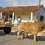 Ochsengespann in Pinar del Rio.