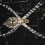 """Spinne """"Golden Orb"""" direkt vor meiner Hütte im Busch-Camp beim Krüger-Nationalpark."""