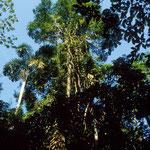 Mitten im Amazonas-Regenwald.