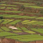 Reisfelder am Weg bei der Wanderung im Norden des Landes.