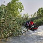 Bootsfahrt durch den Schilfgürtel bei Bandar Anzali am Kaspischen Meer. Obwohl dies Brutgebiet für seltene Vogelarten ist, jagt man mit den schnellen Booten hindurch.