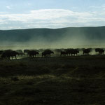 Safari im Massai - Mara Nationalpark.