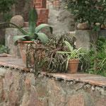 Mediteraner Garten/ (Geheimnis) Prignitz