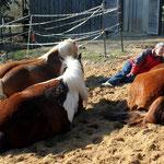 Entspannt mit Pferden