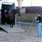 Pferd rückwärts verladen