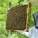 Jede Menge Bienen