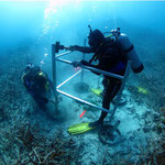 AIMS divers installing ocean observing infrastructure on a sandy patch, GBR, photo from http://www.aims.gov.au/docs/research/research-highlights/imos.