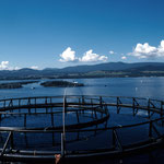 Salmon cages in Tasmania. Image from CSIRO CCBY.